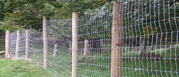 Deer fencing - Timberlink.co.uk - market drayton, shropshire